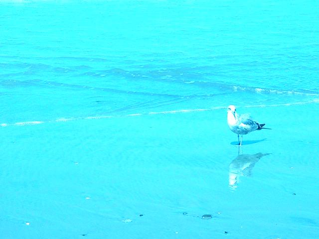 Bird Near Aqua