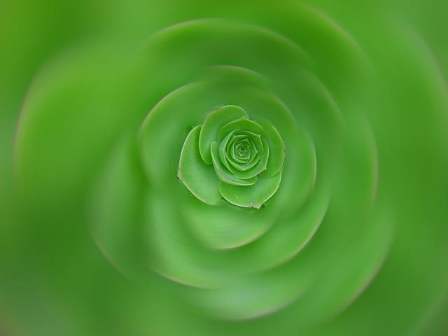 Lettuce Radial Blur